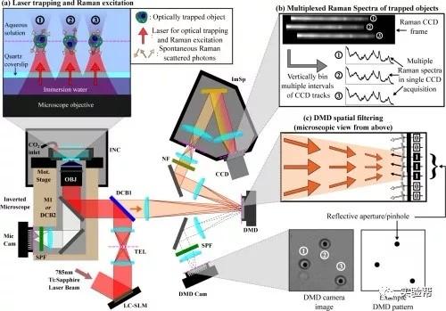 研究人员用激光显微镜组合实现活体细胞的光学捕获、移动和分析